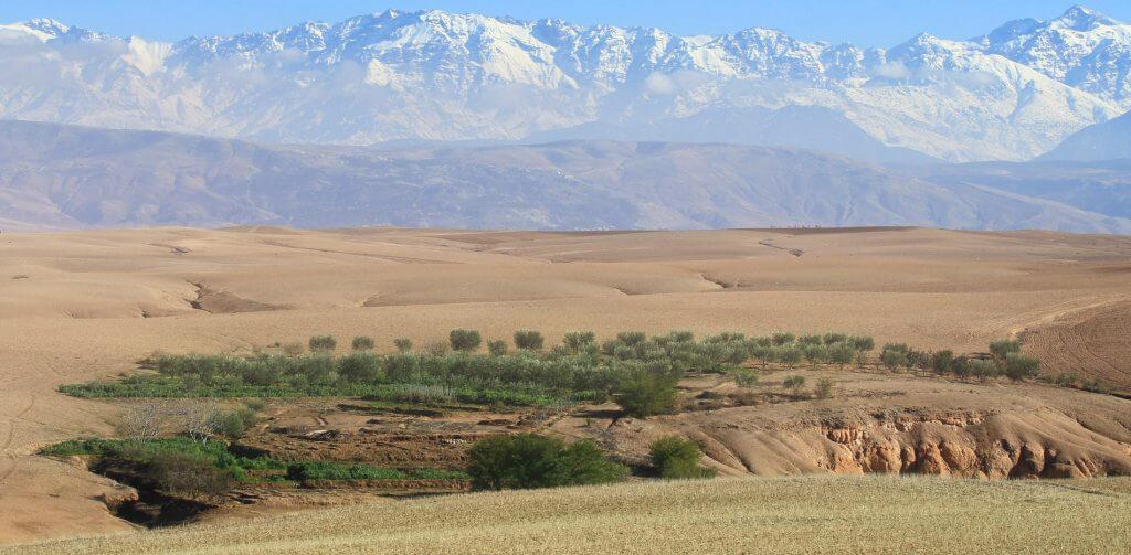 Oasis dans le désert d'Agafay